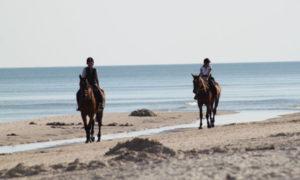 horses-325219_1920_sebagee