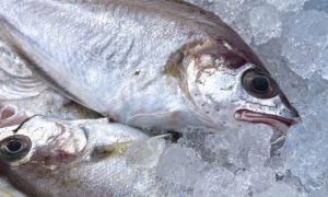 fresh-fish-1152113_1280