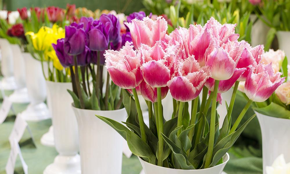 Jak Dbac O Ciete Kwiaty Portal Mojafigura Uroda Zdrowie Sport